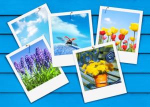 Bunte Frühlingsboten, Frühlingsgrüße, Sofortbild, Pinwand